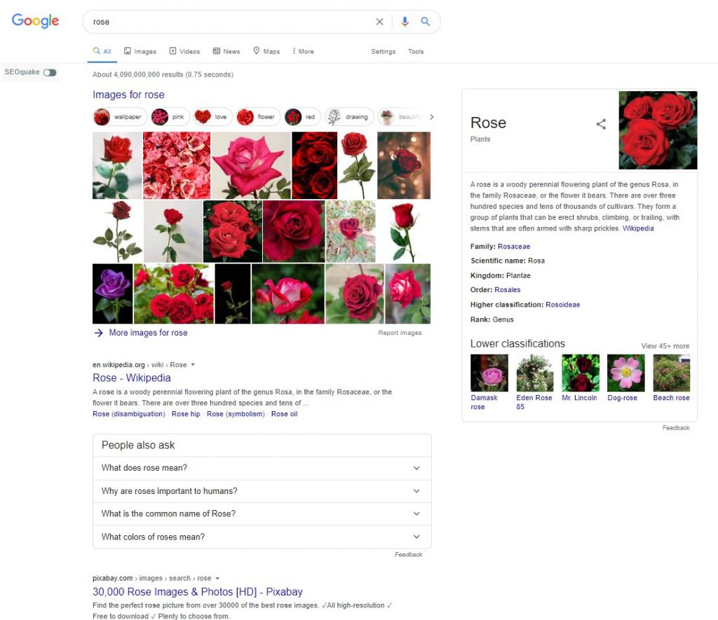 rose search
